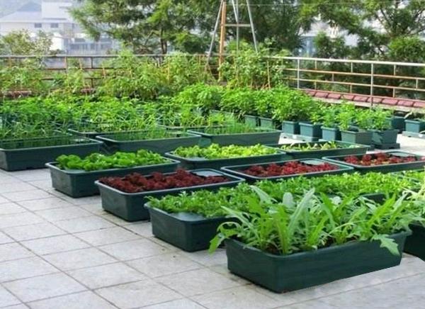 蔬菜无公害种植